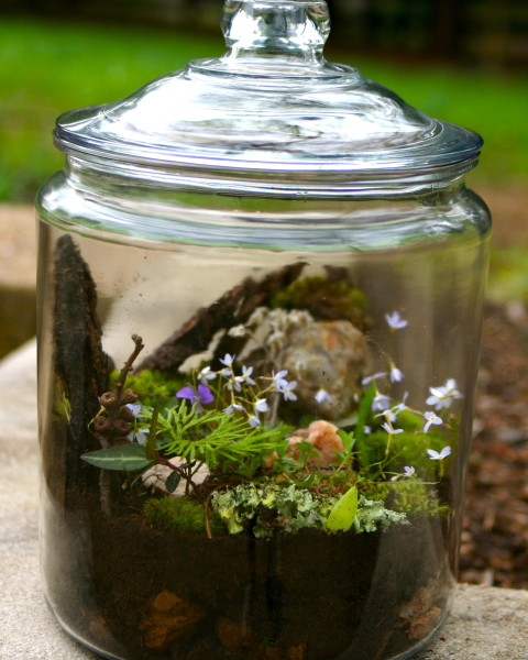 Get To Know Your Backyard Build A Terrarium One Part