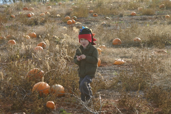 organic pumpkin patch on halloween
