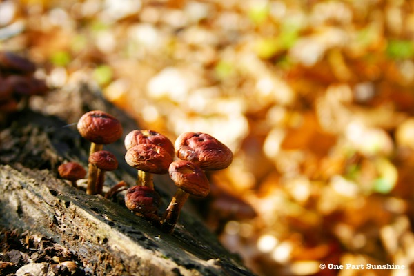 Red Mushrooms on Skyline Drive in Blue Ridge Mountains