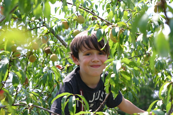 Ways to Encourage Kids to Love Nature | Picking Peaches